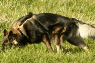 Kan man lære en gammel hund nye triks?