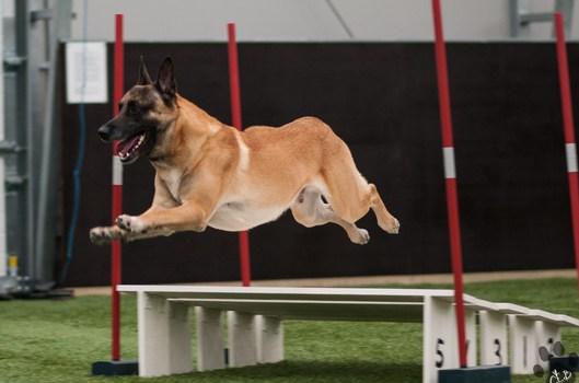 Temakurs: Valp til agilityhund (Del I)