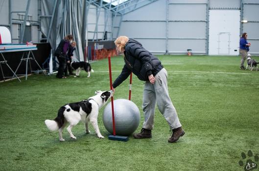 Hundesport for familien