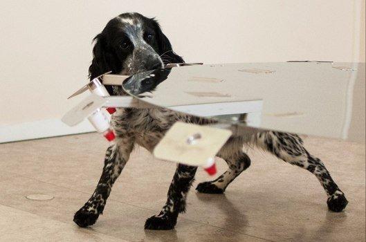Online 6 - Hundens luktesans del II - Luktpersepsjon - luktdiskriminering