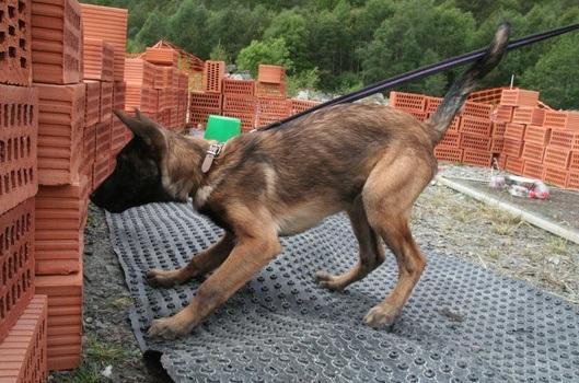 Søksutvikling for hundesport og tjenestehund